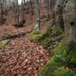 源泉近くには木々が生い茂っている(撮影は2月末)。