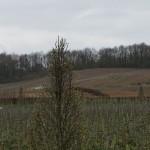 サロンになるブドウは、林のすぐ下の斜面の畑。畑と畑の間の道が白く見える。