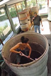 収穫後、醸造所内は大忙し。