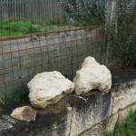 粘土質の表土の40cm下に、こんな石灰岩の岩盤がある。