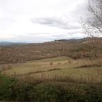 冬の畑(2010年2月)。