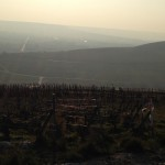 アイ村はいくつもの丘が連なっていて、その斜面にブドウ畑があります。