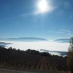 ブドウ畑の下に雲海が。