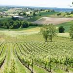 最も近年入手したカシーナ・サン・ピエトラの畑は、主にルケとグリニョリーノを栽培。