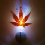 日下淳一氏により紅葉にも美しい光の演出が。