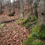 源泉近くの林の風景。