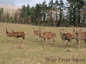 鹿の他にも多くの野生動物が生息。