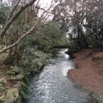 金鱗湖から流れる川の風景も、なんだか風流ですね。