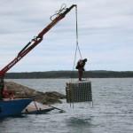 海底に沈められた。この後、もう少し沖合いの水深40メートル付近まで運ばれたという。