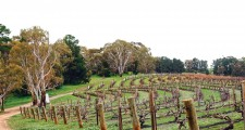 1australian_vineyard_2000x1500